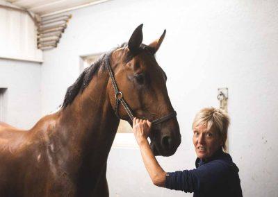 Ruskea hevonen tallissa