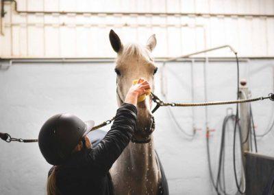 Hevosen pesua tallissa